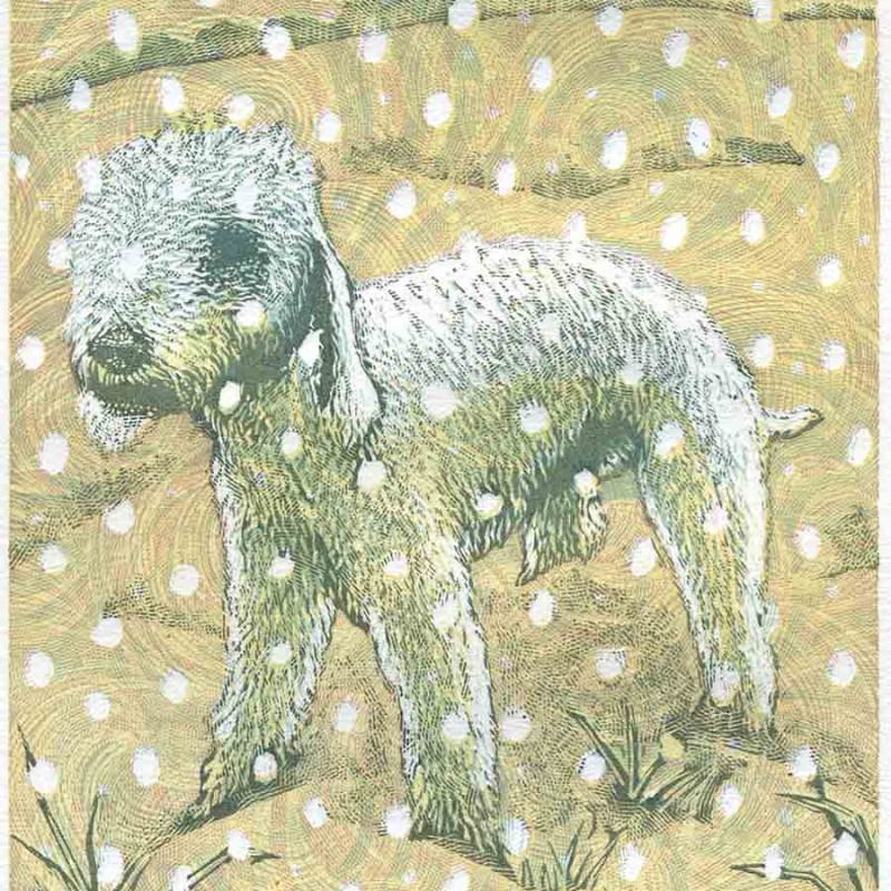 White Dog in Winter by Chris Daunt