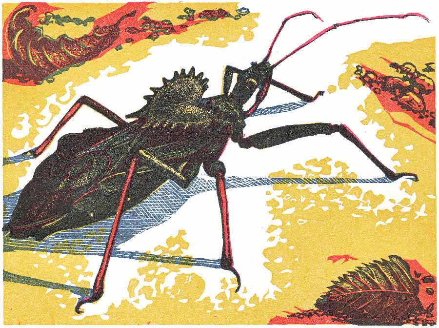 Joanne Price, Wheel Bug